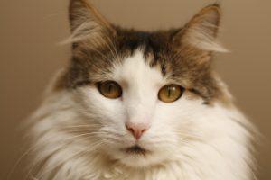 A macskatápot minden cica kedveli